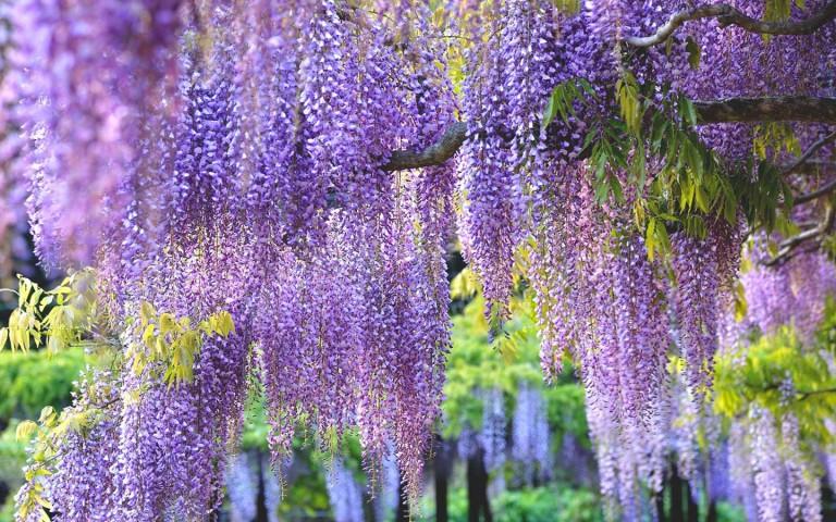 brighter_blooms_nursery
