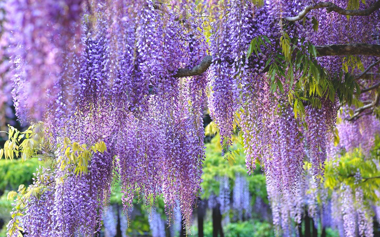 Brighter Blooms Nursery